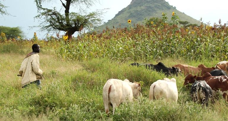 Au Tchad, comme dans d'autres pays du Sahel et d'Afrique Subsaharienne, la gestion durable des terres est indispensable